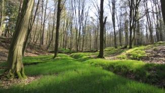 forêt de soigne