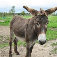 Een ezel gered #overijse #vlaamsbrabant