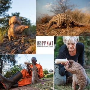 """© """"Photographes pour la Préservation de la Nature"""""""
