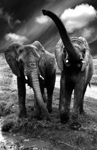 """Expo """"Les derniers Elephants"""" (c) Célie Jurgelevicius"""