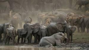 """""""Afrique extraordinaire"""" (c) Tanguy Dumortier"""